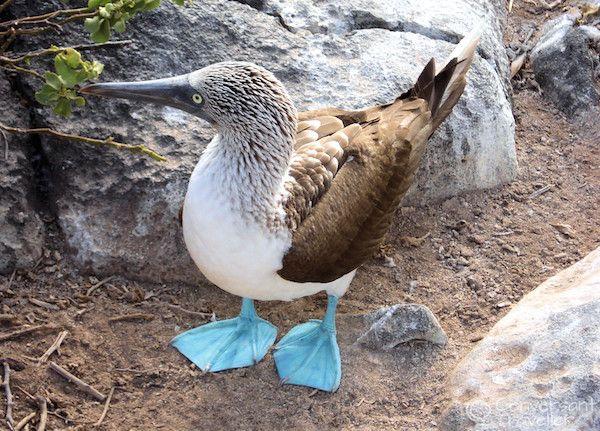 Idee per un viaggio di nozze spettacolare nell 39 oceano pacifico - Foto di animali dell oceano ...